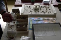 7L Biology Project (Jun 4, 2004)